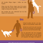 Play with your dog – infographics