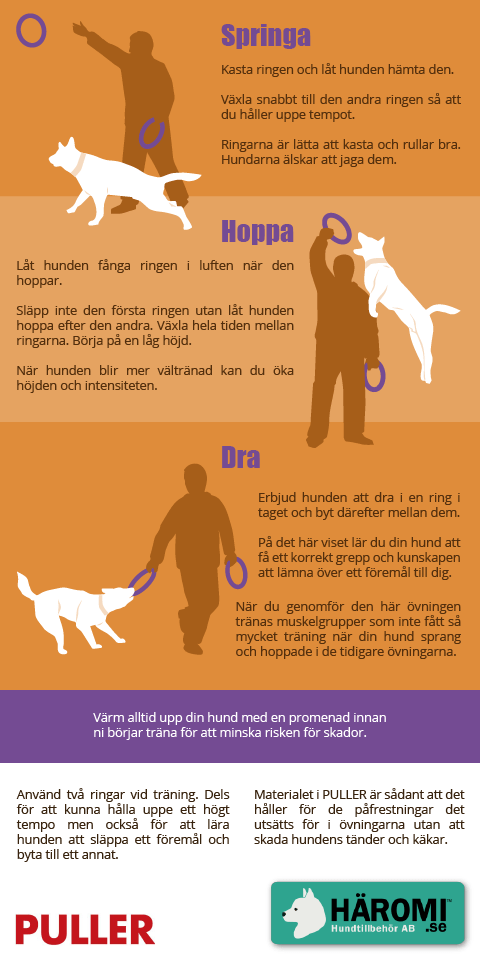 Play with your dog - infographics 4